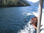 Boat cruise in Doubtful Sound